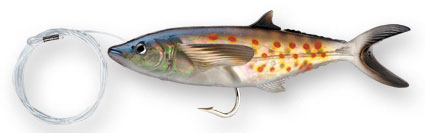 http://www.deportespineda.com/productos/senuelos_williamson/live/spanish_mackerel.jpg